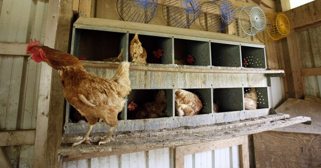 USDA overhauls 50 year-old poultry inspections
