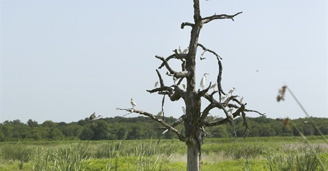 Man-made wetlands turn wastewater into tap water