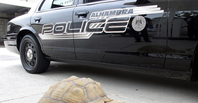 Owners claim tortoise found strolling in suburb