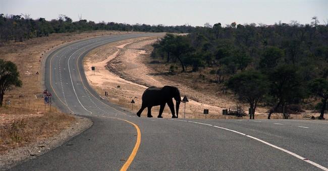 Botswana, a rare refuge for elephants