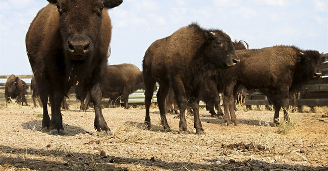 Official: Anthrax found in bison, no food concern