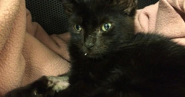 Vet uses overdose reversal drug to revive kitten