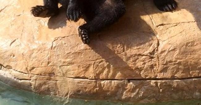 Bear escapes habitat at Texas zoo; no one hurt