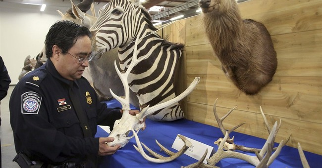 Baboon, lynx, zebra among seized zoo of taxidermy