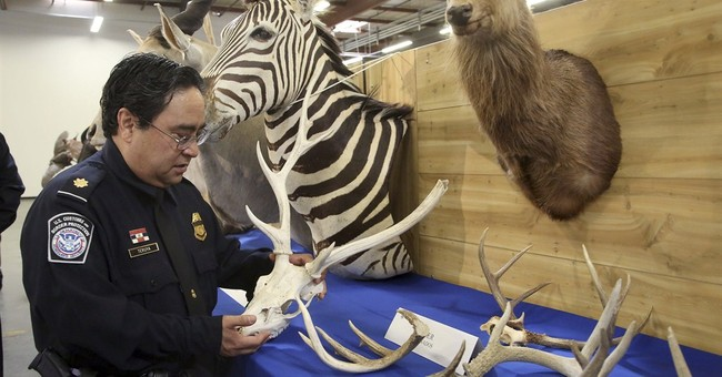 Baboon, lynx, zebra among seized zoo of taxidermy