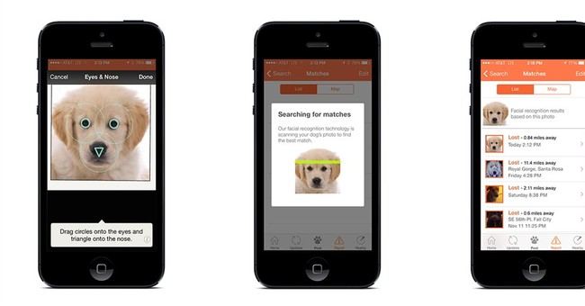 Picture it: Facial recognition to find lost dogs