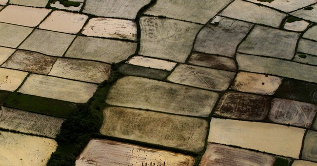 Image of Asia: Planting rice after monsoon rains