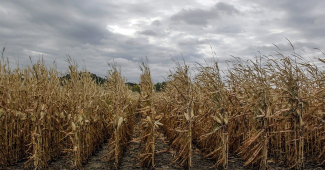 Record crops predicted; farmers market carefully