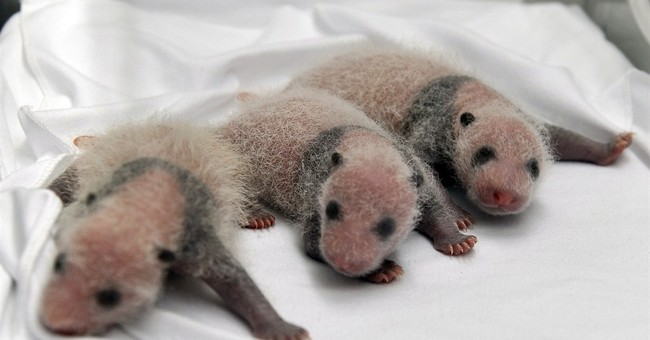 China announces birth of rare panda triplets