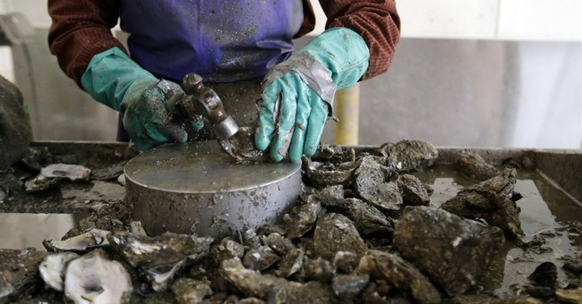 Gulf oyster harvest has nose-dived since BP spill