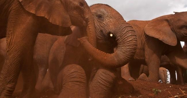 Kenyan elephant activist wants an ivory arrest