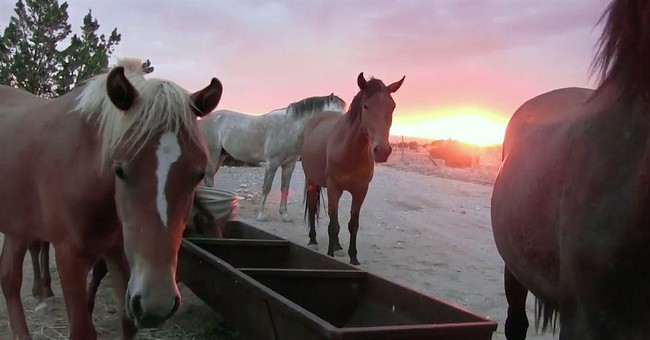 Feral horse fight brewing in New Mexico village