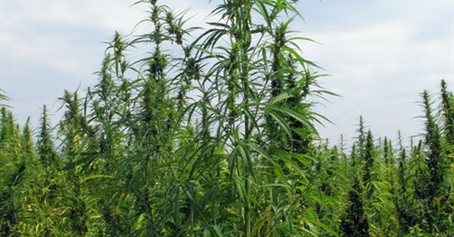 Hemp homecoming: Rebirth sprouts in Kentucky