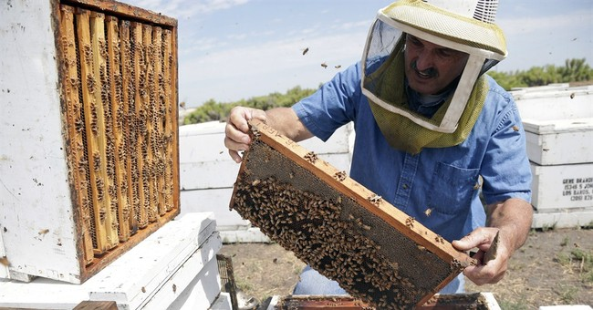 California drought stings bees, honey supplies