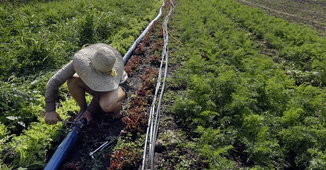 New go-to career for New England's young: Farming