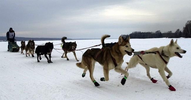 Minnesota reboots Beargrease Sled Dog Marathon