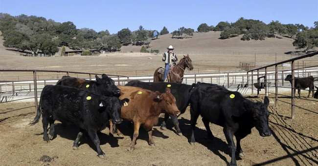 California drought has ranchers selling cattle