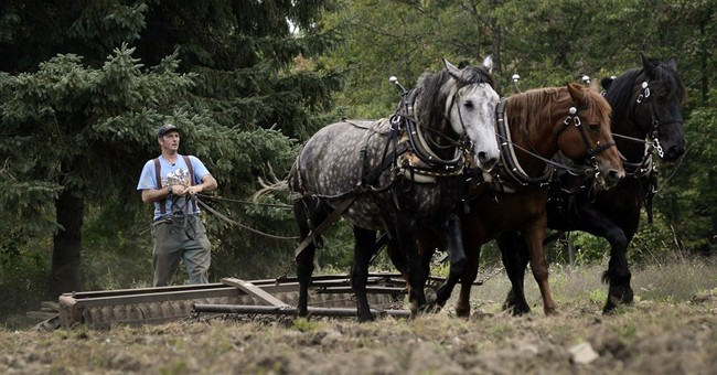 Horse power gains favor among small-scale farmers