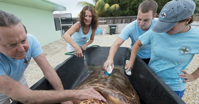Rescued turtle heading to new home in San Diego