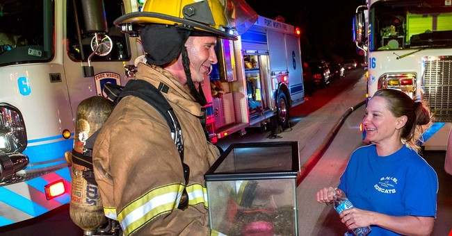 Texas firefighters rescue pet frog from blaze