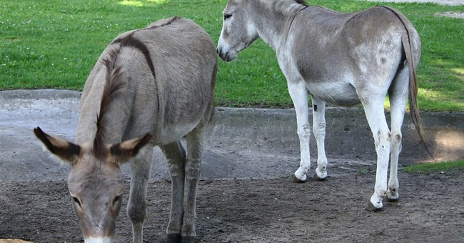 Donkeys reunited at Polish zoo after sex scandal