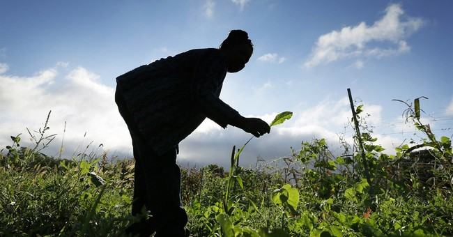Refugees settle in thanks to small farm plots