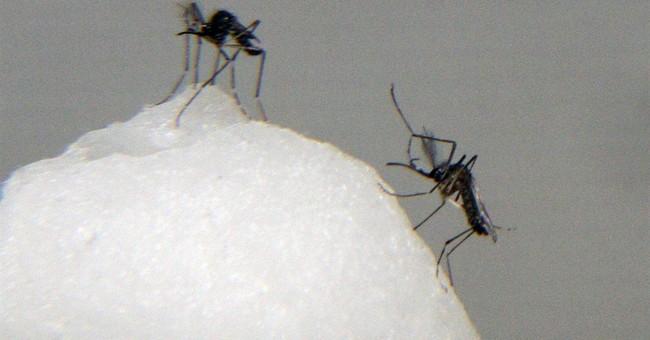 New mosquito-borne virus spreads in Latin America