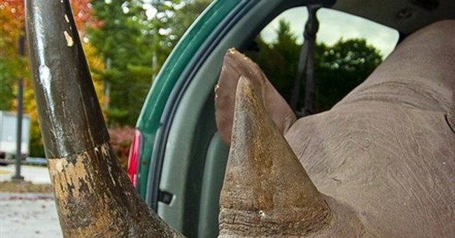 Charges dropped for man who sold rhino head