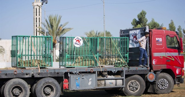 Gaza lions sent to Jordan after war damages zoo