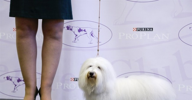 2015 Westminster pack to include 2 new breeds