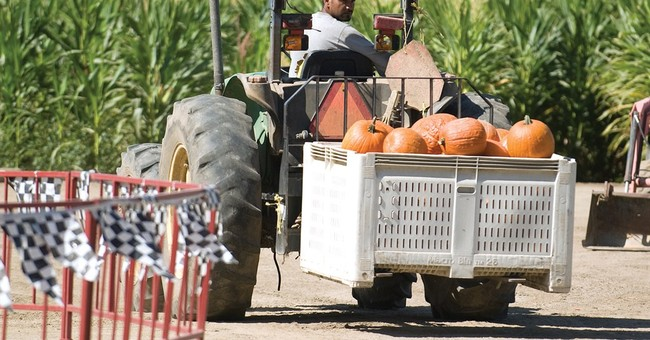 One town has its hand in 1000s of pumpkin pies
