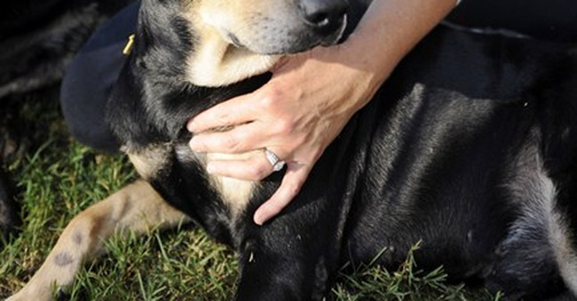 Dog named 'Lazarus' survives euthanasia attempt