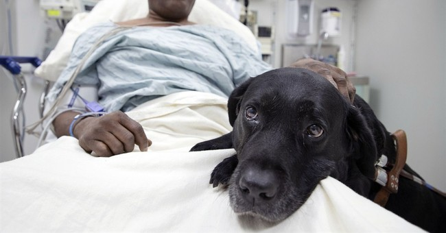 Blind NYC man in subway fall gets new guide dog