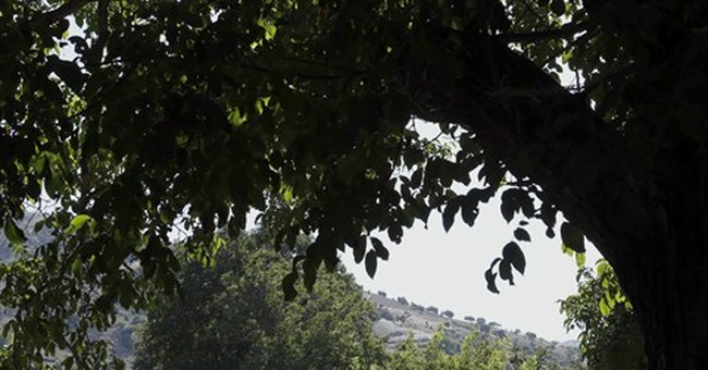 Morocco mulls legal pot growing, breaking taboo