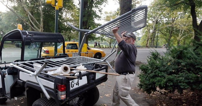 Dead bear cub in Central Park likely hit by auto