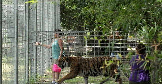 Crowdfunding gives a leg up to animal projects