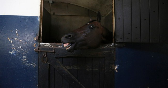 AP PHOTOS: Horse poisoning alarms Venezuela racing