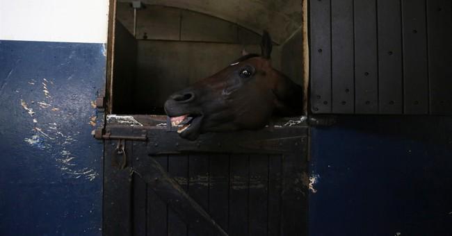 AP PHOTOS: Horse poisoning alarms Venezuela racing