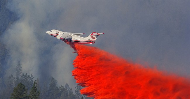 Northern California blaze not showing much growth