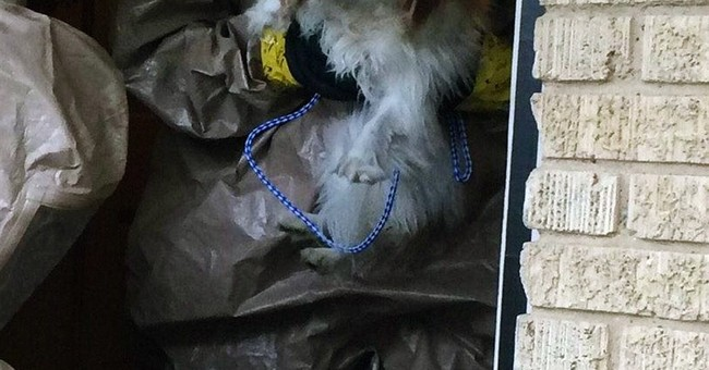 Dog of Dallas nurse with Ebola moved to air base