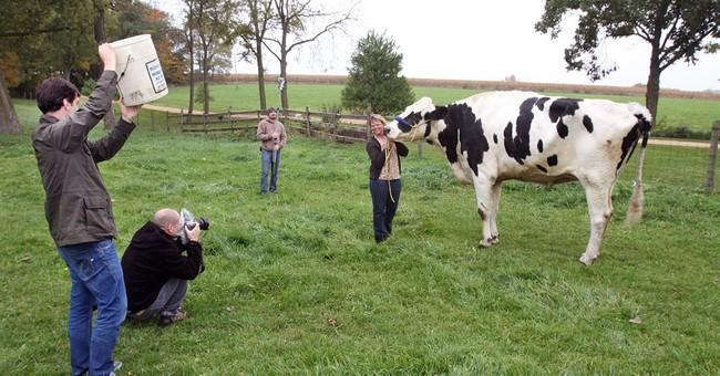Illinois pet dubbed world's tallest cow