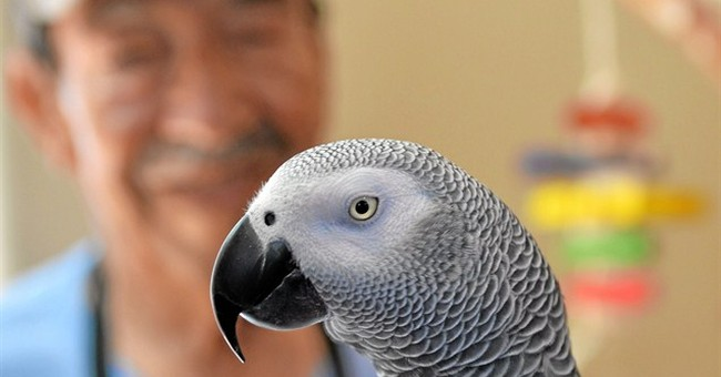 Spanish-speaking parrot goes to Torrance family