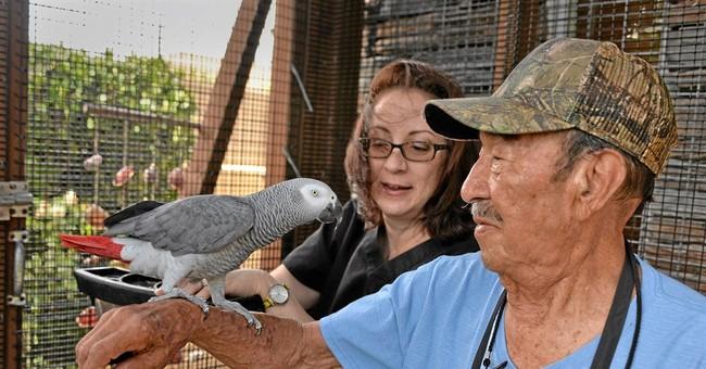 Spanish-speaking parrot goes to Torrance family