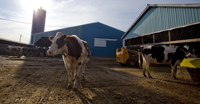 Dairy farmers welcome farm bill's subsidy overhaul