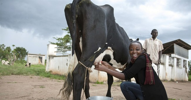 Miss Uganda contestants compete in farming