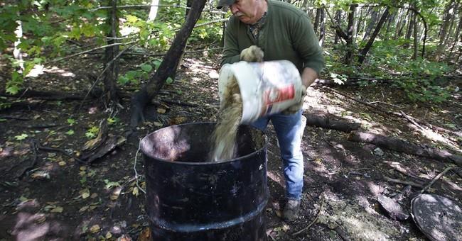 Maine bear bait vote sparks interest around US