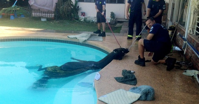 Horse rescued from pool at suburban Phoenix home