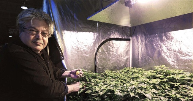 Medical pot dilemma: Where to get the first seeds?