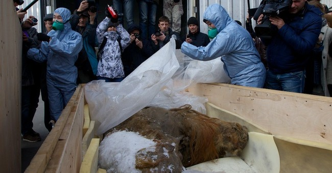 Nicely preserved mammoth carcass shown in Moscow