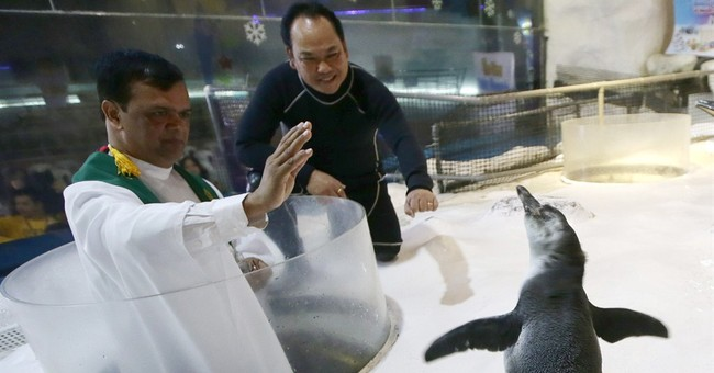 Image of Asia: The blessing of the baby penguin